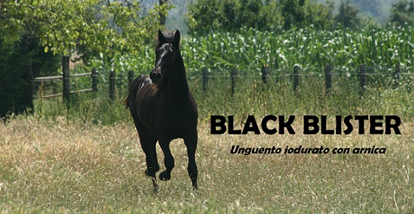 black blister onguent iode arnica chevaux cheval